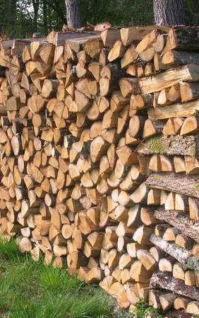 Palivové dřevo jesenice